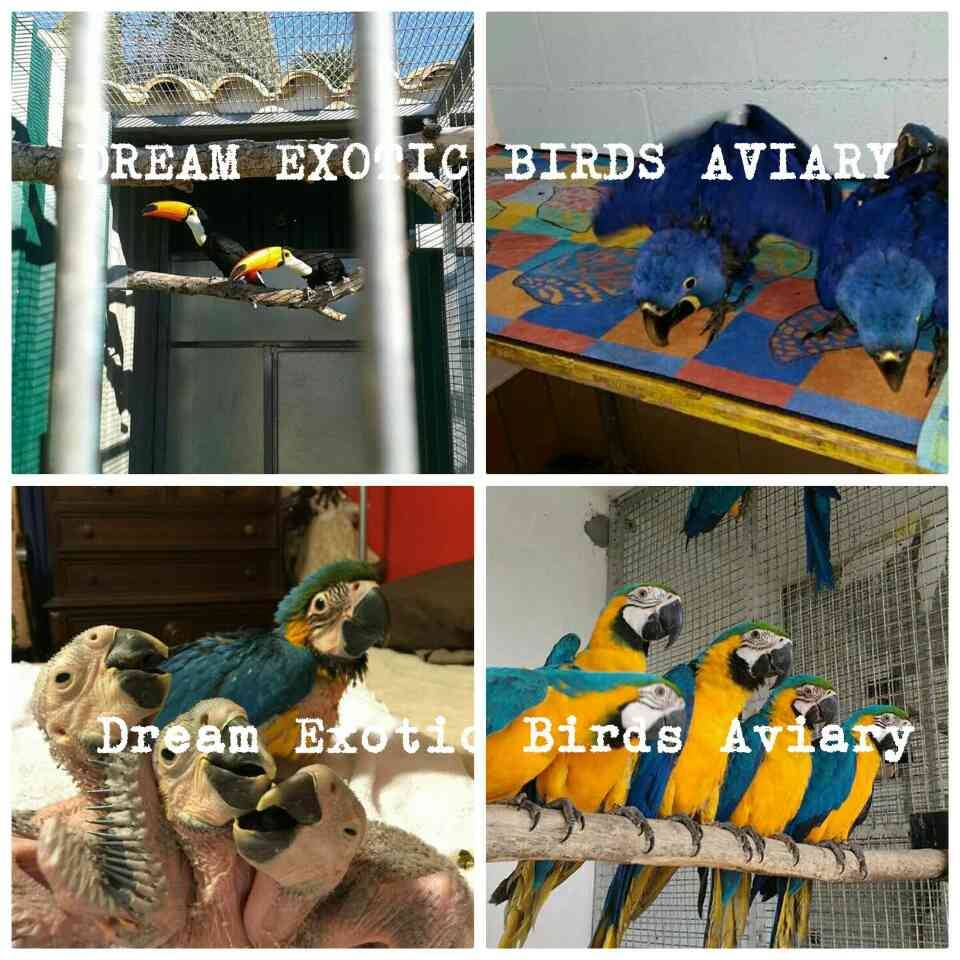 We are Live Exotic Birds Exporters