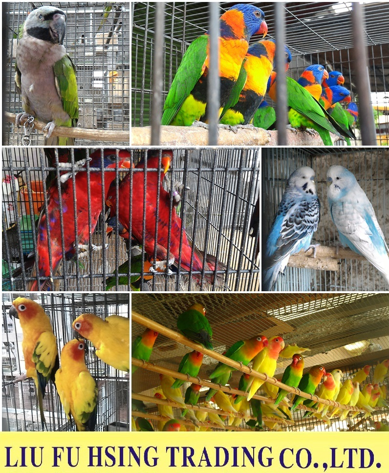 Exporting Parrots/Hedgehogs/Sugar Gliders/Rodents Animals