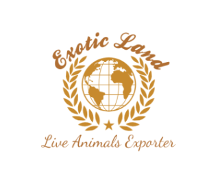 Exotic Land Co, Egypt ( Live Animals  ) Available to Export